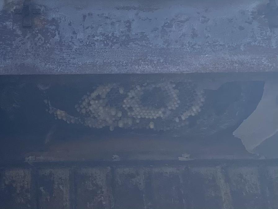軒先の中にスズメバチ!秋田市スズメバチ駆除