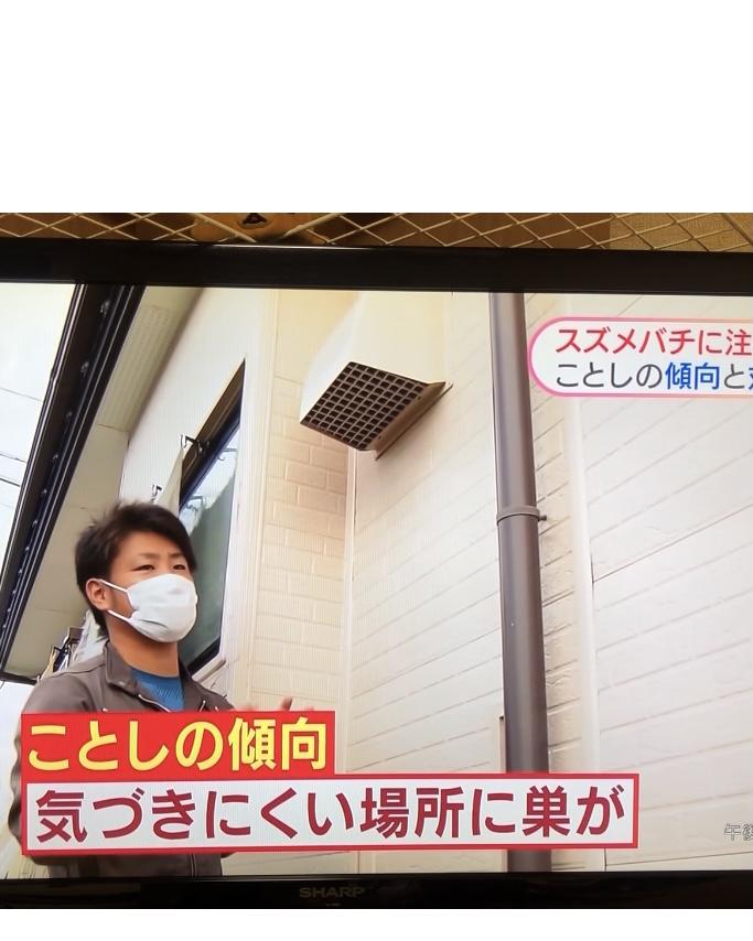 NHKからスズメバチの取材依頼きました!!